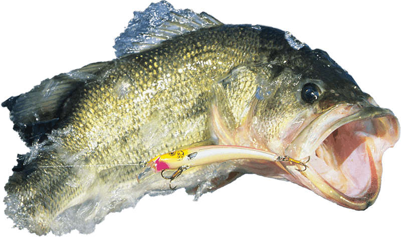largemouth bass cutout 2_Fishing_Guide_Western_NC